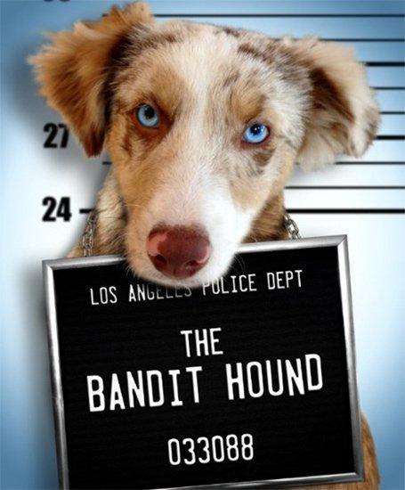 Пёс Бандит / The Bandit Hound (2016) DVDRip